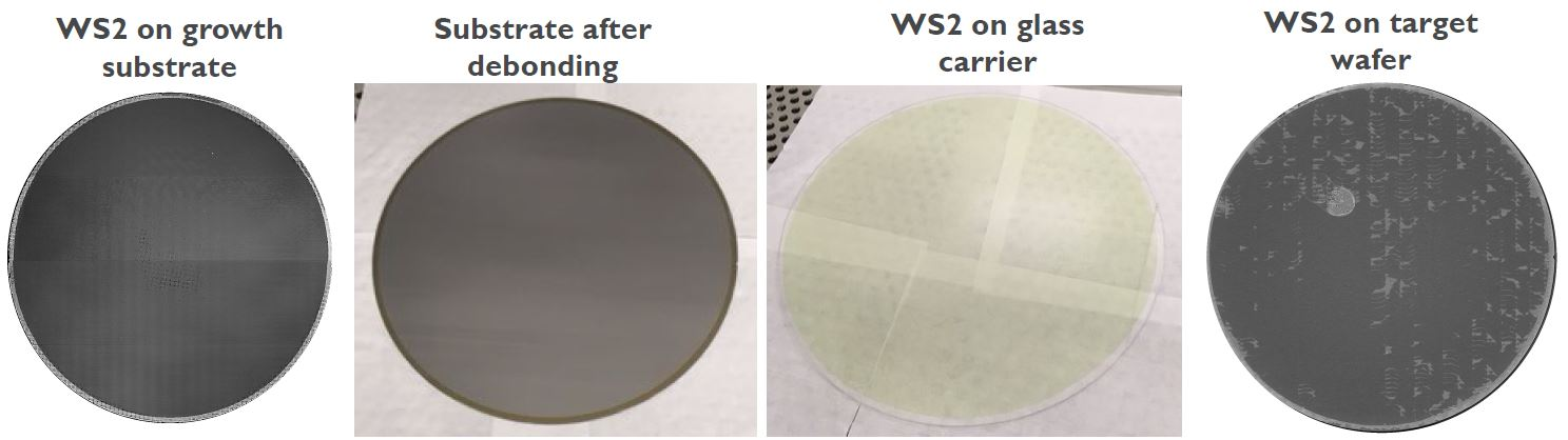 300mm growth and transfer of a monolayer (7 Ångstrom) WS2 layer