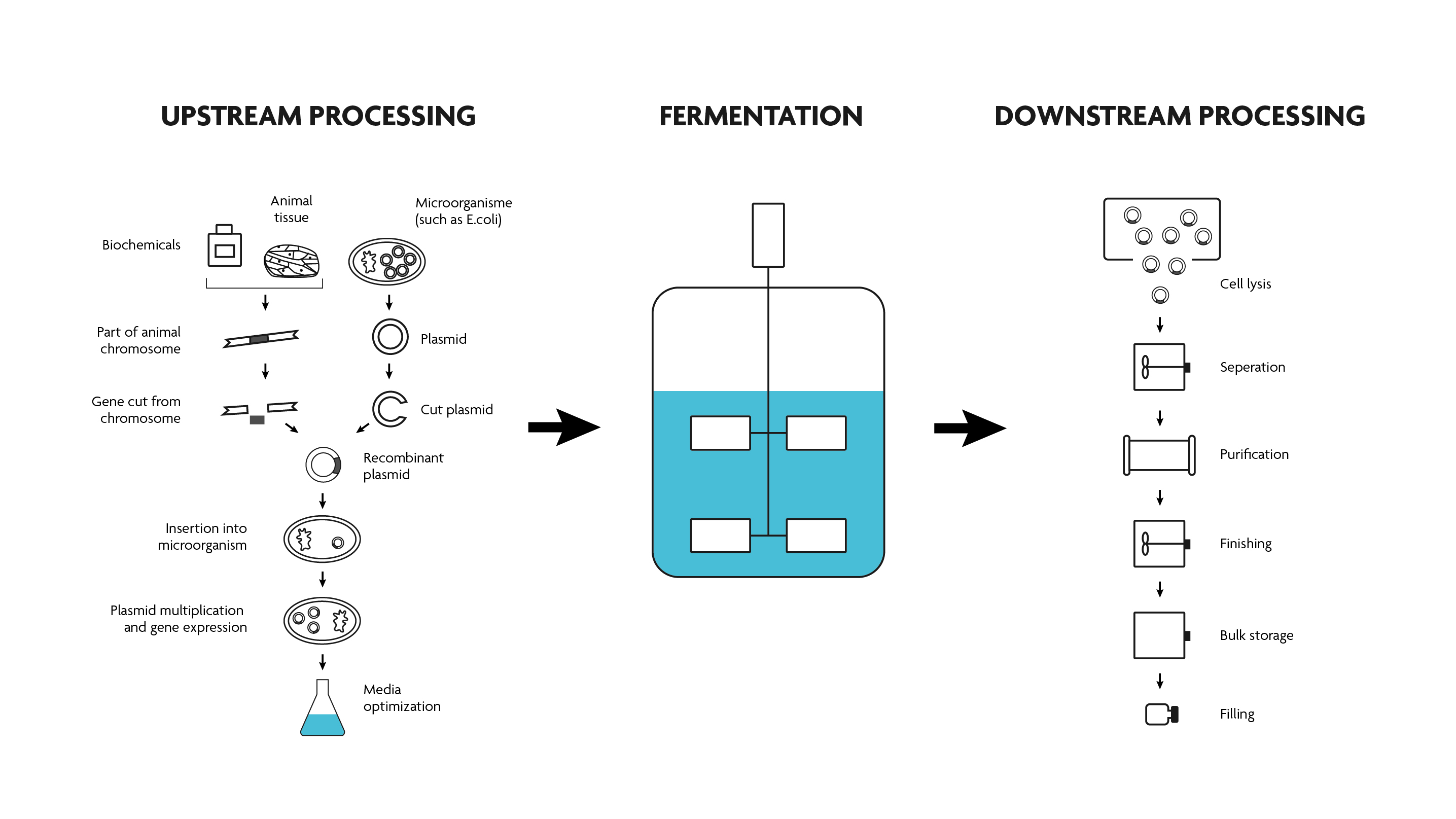 Scheme of a typical bioprocess flow.