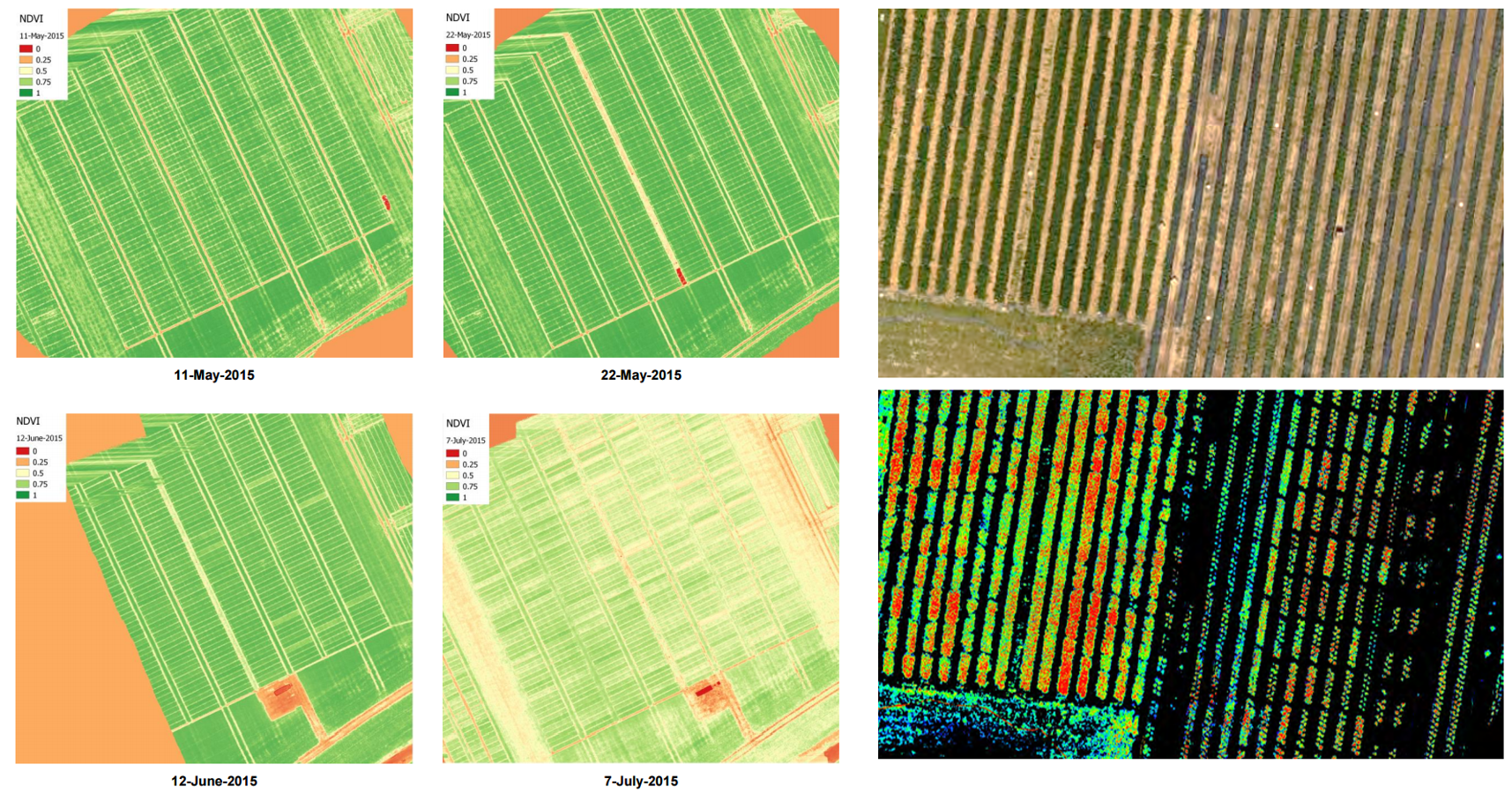 Orthophoto hyperspectral aerial images of strawberry test field in Belgium: NDVI images (left) and chlorophyll index map (right) to support precision agriculture decisions – Courtesy of VITO and pcfruit.